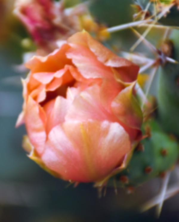 Pink Flower by Kristin Bendigo