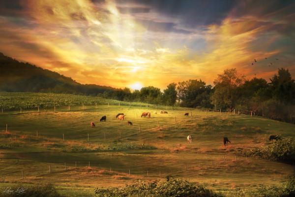 Golden Memories by Laura Lipke