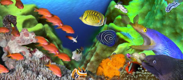 Under the Sea, Anilao, Philippines    by Kathy Krucker