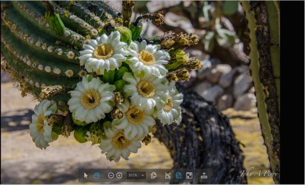 Saguaro #14 by John Perry