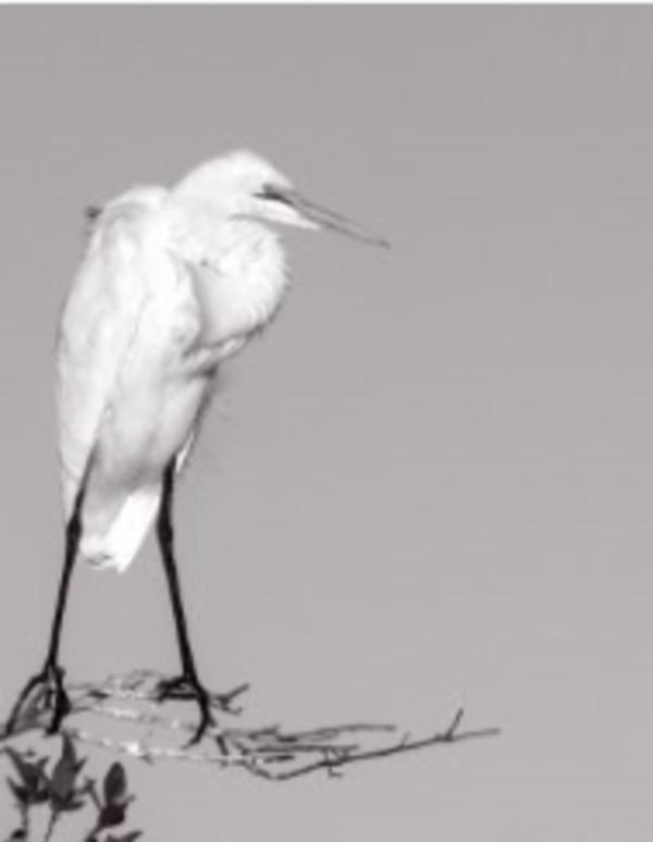 Crane from Zen Series by Sonja  Van Buuren