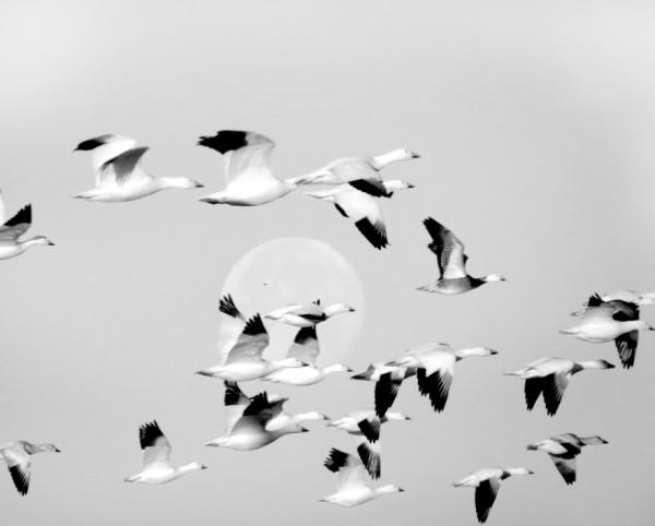 Flock by Sonja  Van Buuren