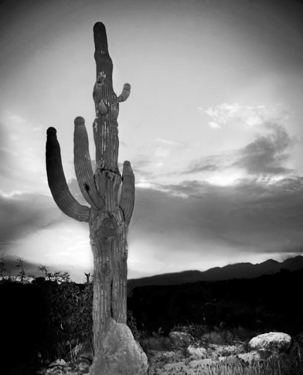 Tanque Verde Guest Ranch by Julie Sandretto-Jenkins