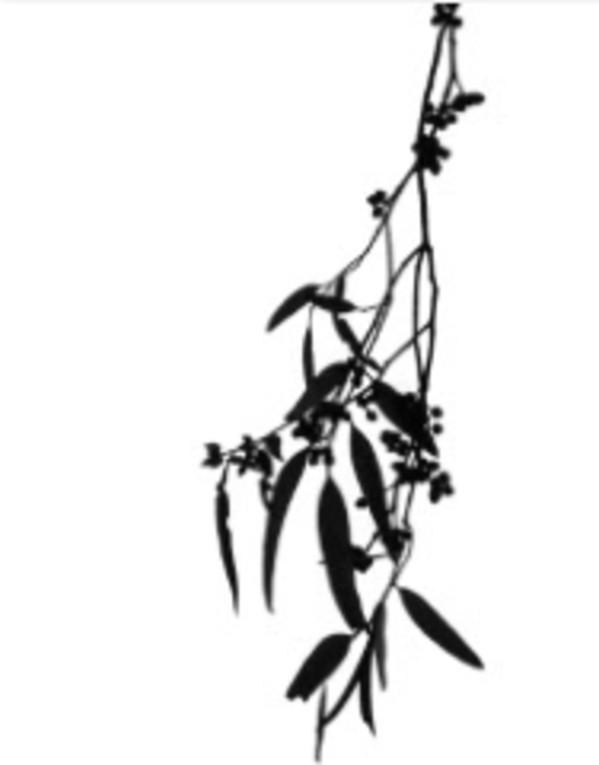 Branches from Zen Series (#3) by Sonja  Van Buuren