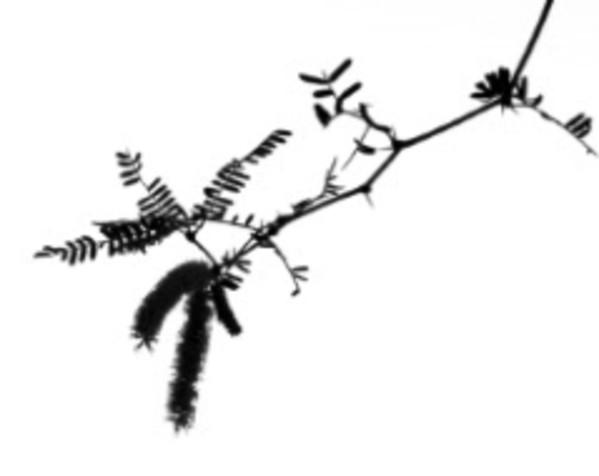 Branches from Zen Series (#4) by Sonja  Van Buuren