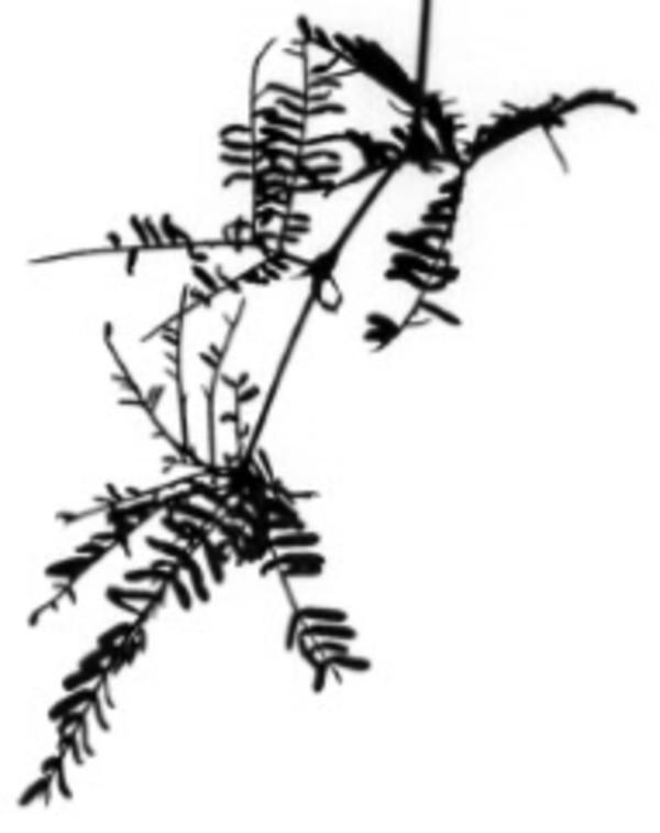 Branches from Zen Series (#5) by Sonja  Van Buuren