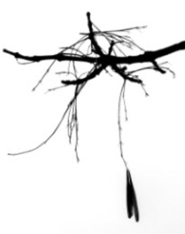 Branches from Zen Series (#6) by Sonja  Van Buuren