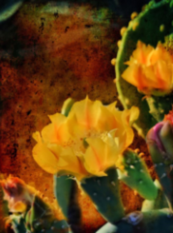 Prickly Pear Cactus Blossoms by Bill Steen