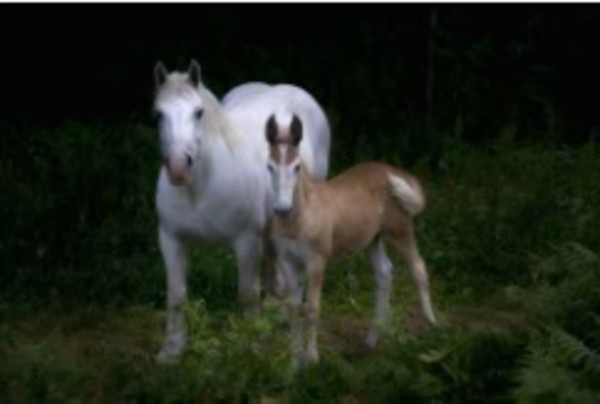 Horses, Dordogne, France by Bill Steen
