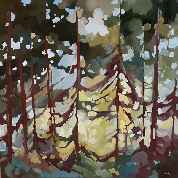 Soft Filter by Holly Ann Friesen