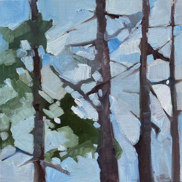 Soft Forest 4 by Holly Ann Friesen