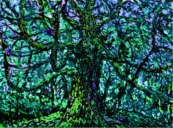 Tree in blue Applecross by Donald Hargrove
