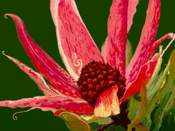Big Pink by Donald Hargrove