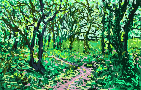 Woodland Walk by Donald Hargrove