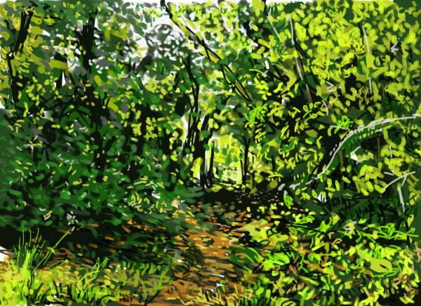 Woodland pathway by Donald Hargrove