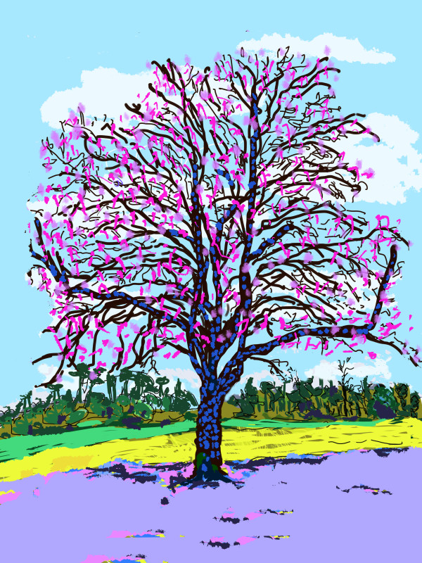 Tree in bloom by Donald Hargrove