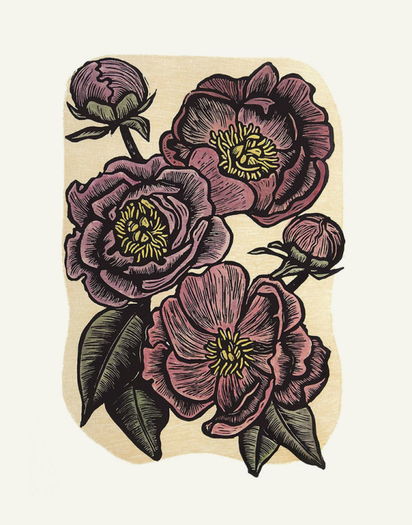 Peonies by Carolyn Howse