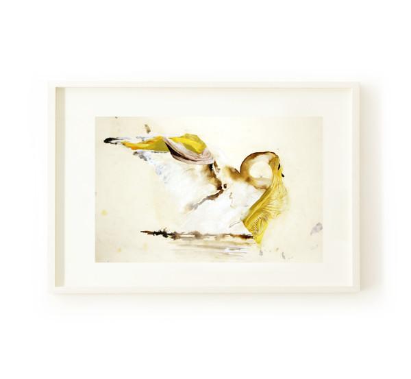 Swan by Nina Fraser