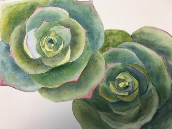 Echeveria ll by Ruth McMillin