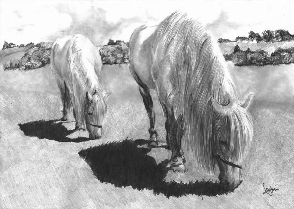 Horse pair by Ally Tate