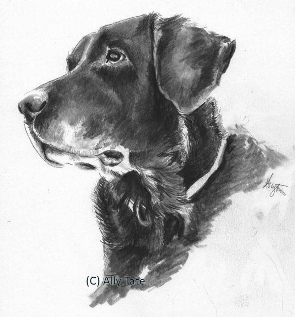 Black Labrador by Ally Tate
