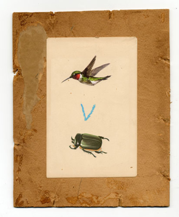 Bird V Beetle by Oliver Jeffers