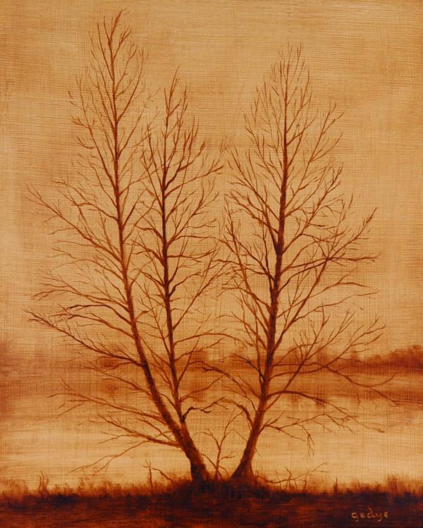 Tree Portrait: Three as One (Sepia Study) by Christine Gedye