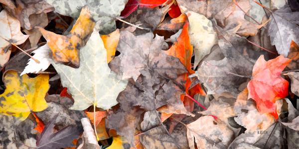 Autumn's Carpet by Barbara Storey