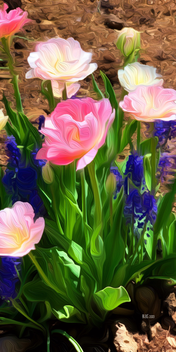 Tulips, after O'Keefe by Barbara Storey