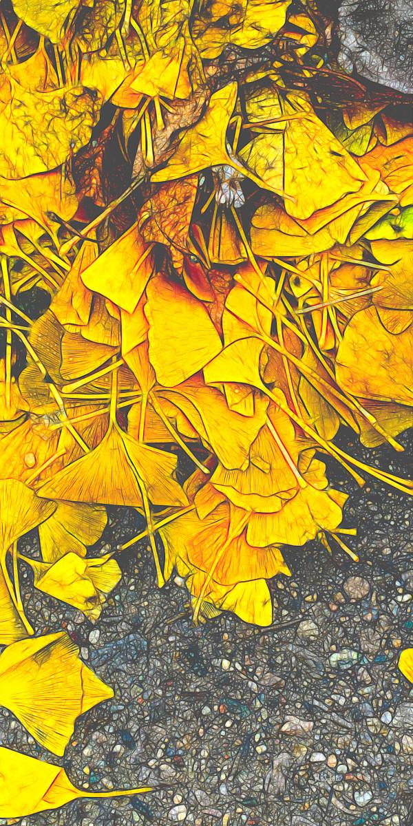Golden Gingko Leaves by Barbara Storey