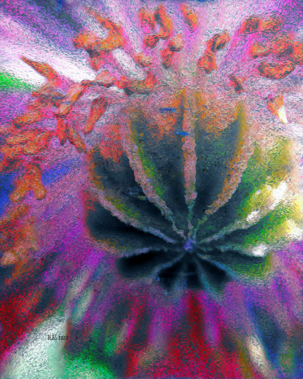 Heart of a Poppy Bloom by Barbara Storey