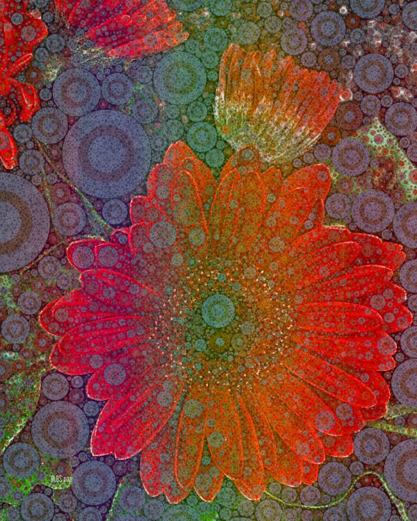 Jewel Daisy by Barbara Storey