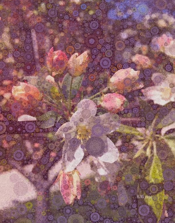 Spring Explosion by Barbara Storey