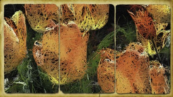Tangled Tulips by Barbara Storey