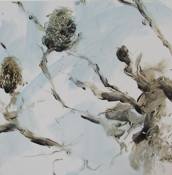 Blue Sky Banksia by Gillian Hughes