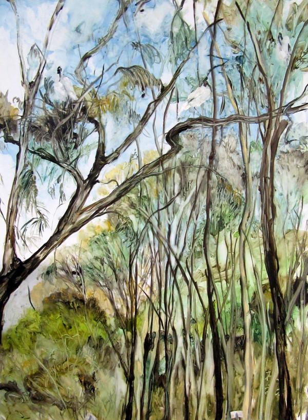 Ibis - Sir Joseph Banks Park by Gillian Hughes