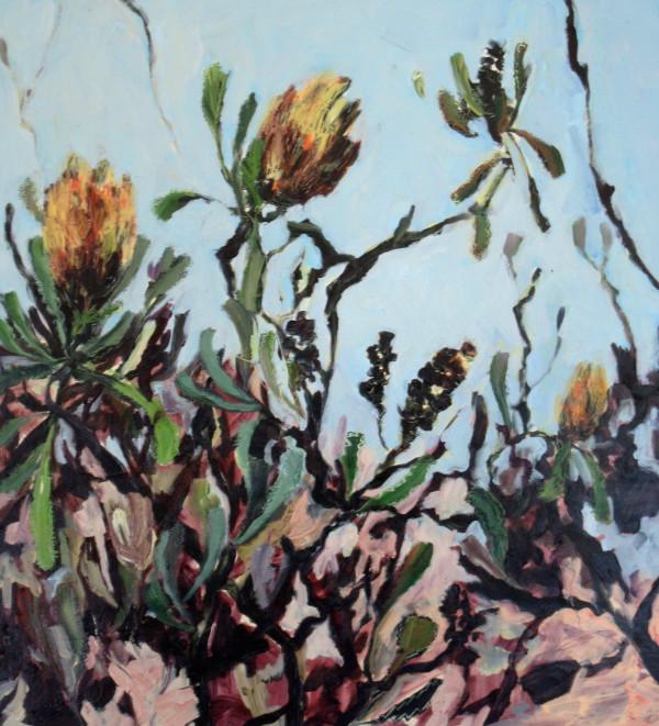Botany Banksias by Gillian Hughes