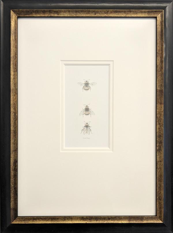 Buff tailed BumbleBee 3.18 by Louisa Crispin