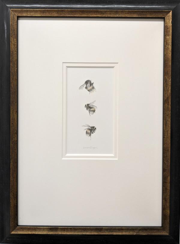 Buff tailed BumbleBee 3.13 by Louisa Crispin