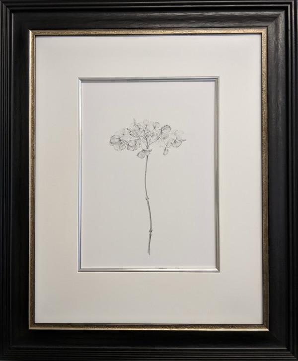 Decay xvii ~ The Hydrangea by Louisa Crispin