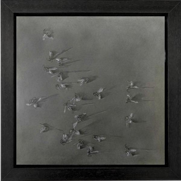 Flight Path iii by Louisa Crispin