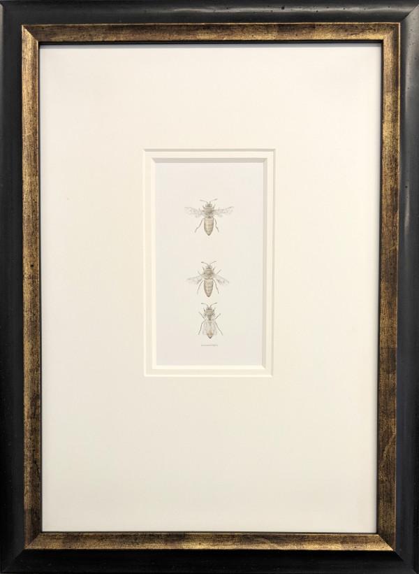 Honey Bee 3.14 by Louisa Crispin