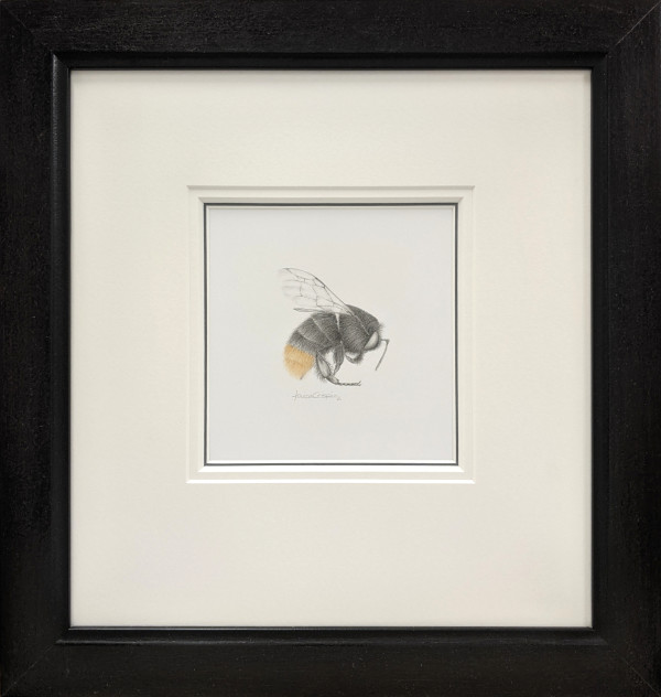 BumbleBee ix by Louisa Crispin