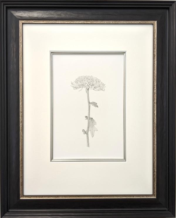 Chrysanthemum iv by Louisa Crispin