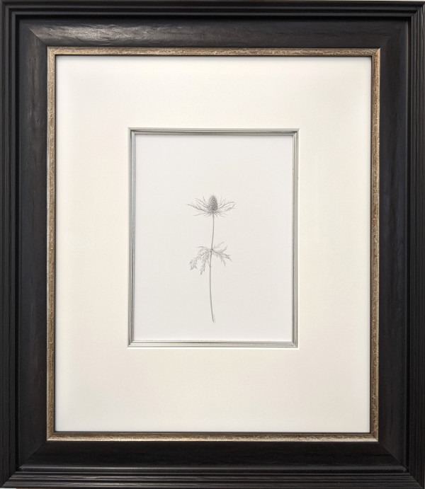 Decay xxvii ~ The Eryngium by Louisa Crispin