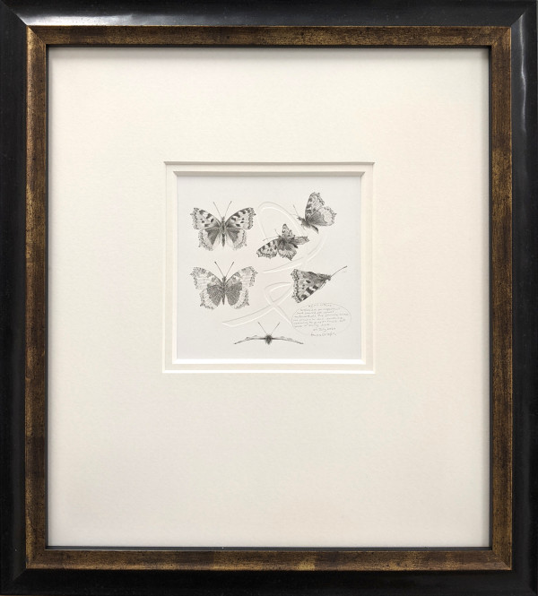 Study of a  Butterfly 001 ~ Small Tortoiseshell by Louisa Crispin