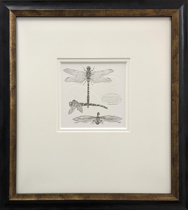 Study of a Dragonfly 001 ~ golden ringed by Louisa Crispin