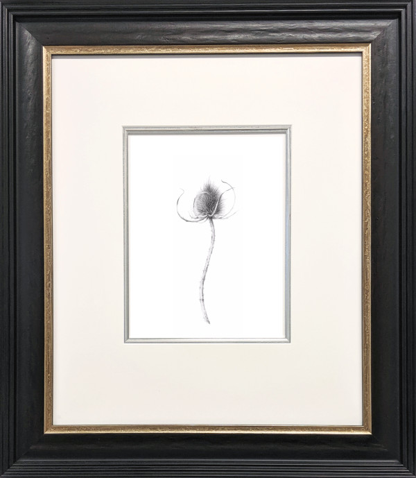 Teasel vii by Louisa Crispin