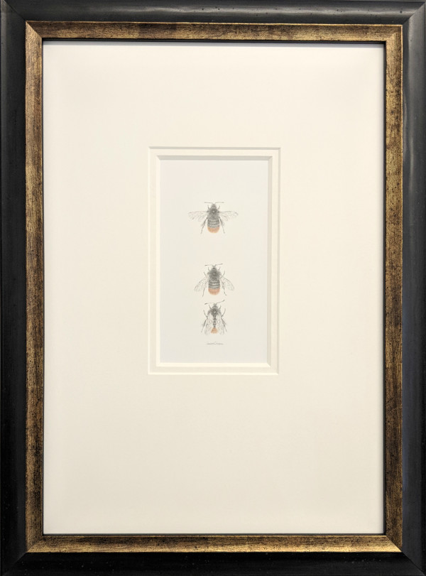 Red Tailed Bumble Bee 3.16 by Louisa Crispin