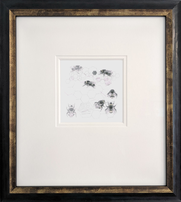 Study of a  BumbleBee 014 by Louisa Crispin